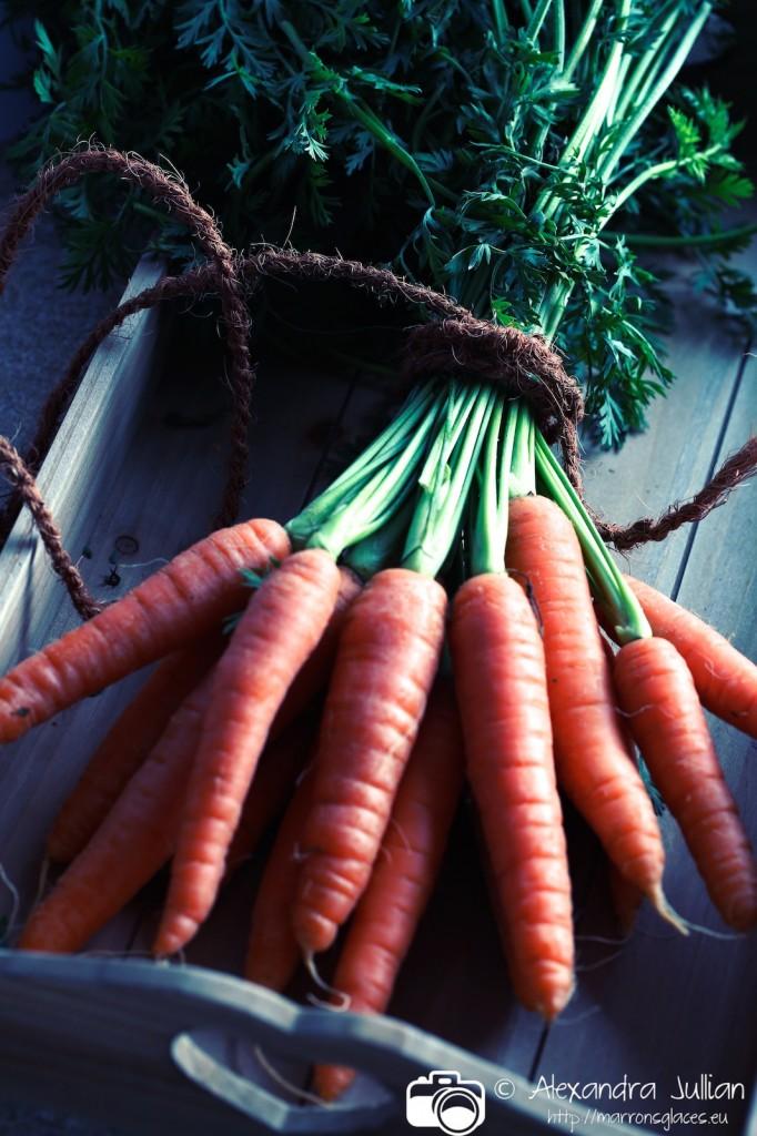 Soupe de fanes de carottes_010